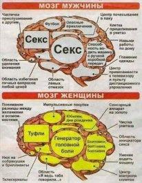 Мозг Полов.
